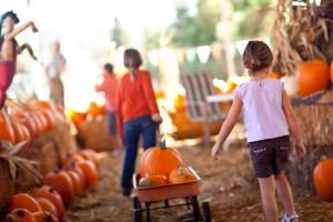 kids-walking-through-pumpkin-patch-300x200